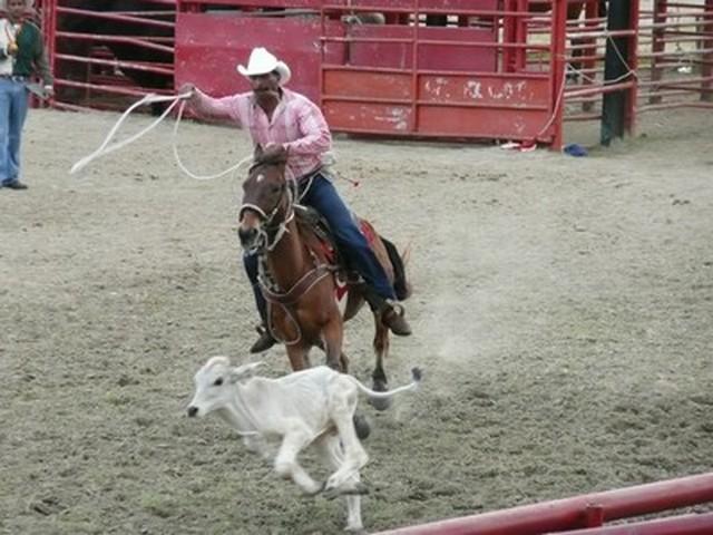 rodeo a Holguin - 2